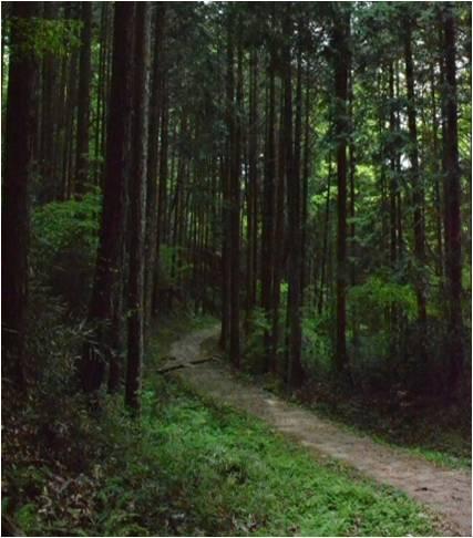 林道などの私道出入口
